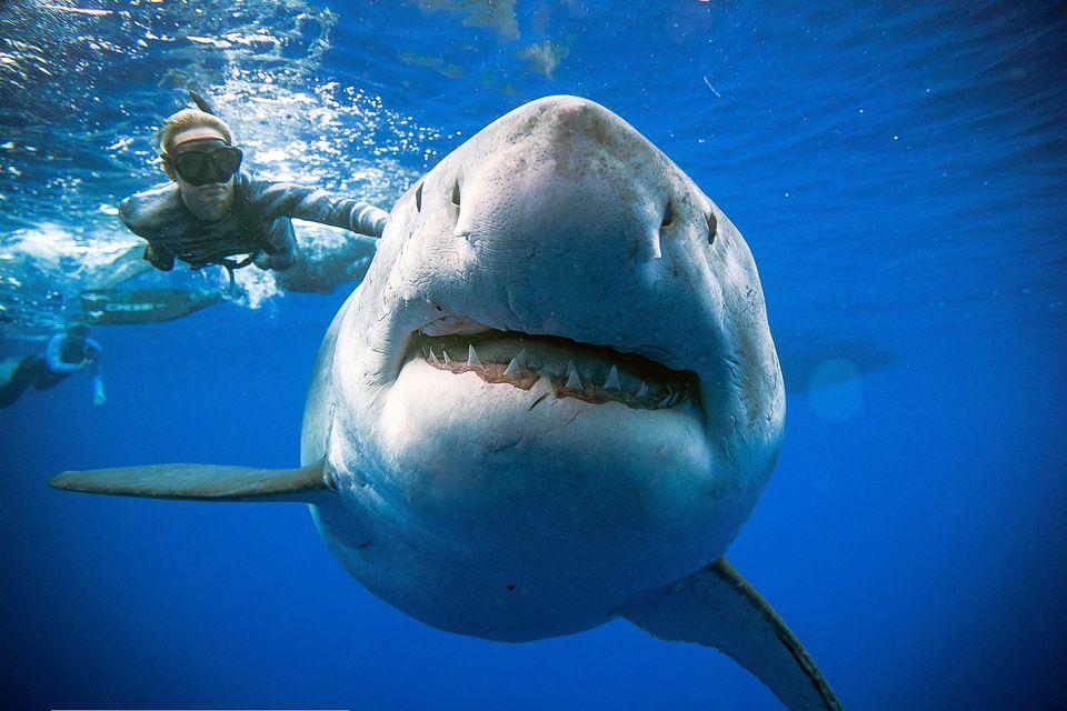 Weitere Bilder des gewaltigen Fisches