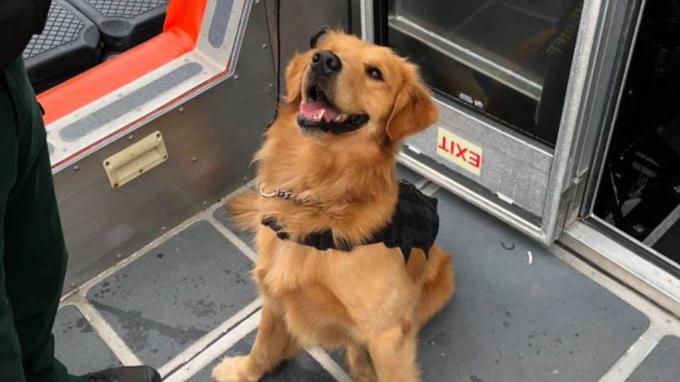 MDMA: Polizeihund kontrolliert Gäste einer Techno-Kreuzfahrt – und erleidet eine Überdosis