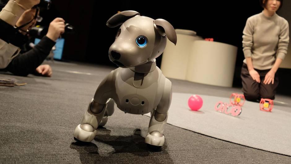 """Tokio, Japan: """"Aibo"""" heißt der Welpe. Der Elektronikhersteller Sony zeigte den Roboterhund auf einer Pressekonferenz. Er ist ausgestattet mit Kameras und künstlicher Intelligenz und kann weit mehr als laufen und bellen. Er soll zum Beispiel aus der Ferne nach Familienmitgliedern, Kindern oder Haustieren suchen können - und er ist stubenrein."""