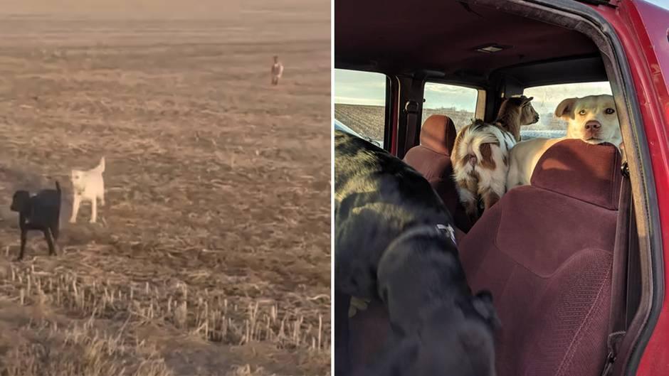 Ungewöhnliche Kumpel: Hund bleibt über Nacht weg – dann taucht er mit zwei neuen Freunden wieder auf