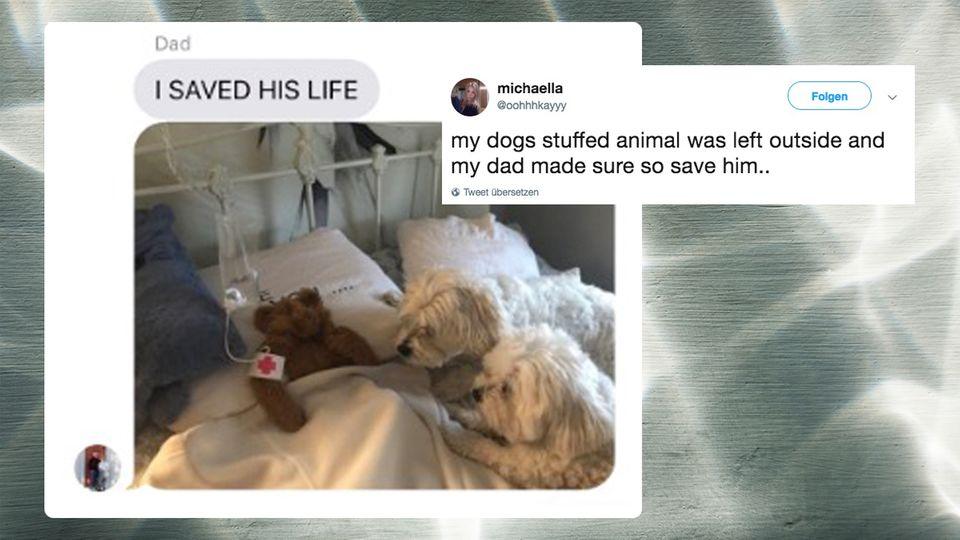 Twitter: Vater rettet Lieblingsteddy seines Hundes