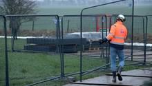 Dänemark setzt im Kampf gegen die Schweinepest auf einen Grenzzaun