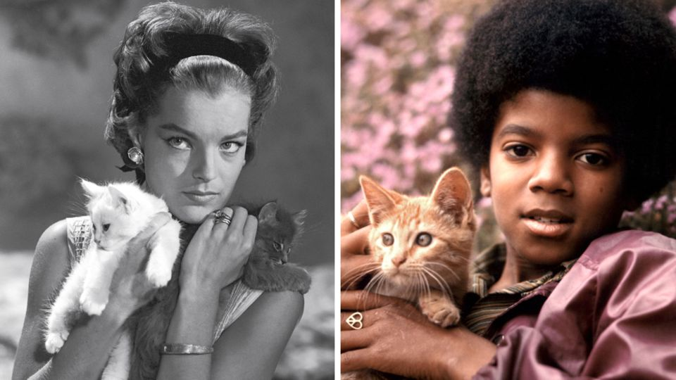 """Neues Magazin """"Miau"""": Michael Jackson, Romy Schneider und Co.: Katzen und ihre Stars"""