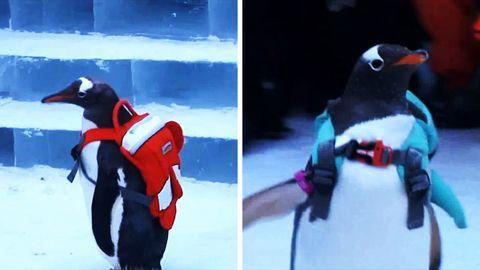 Winterwunderland Harbin: Bunt, schrill und frostig: Die schönsten Fotos von Eisfestival in China