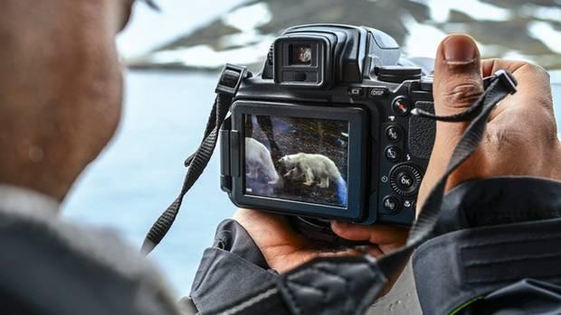 Begehrtes Fotomotiv: Wenn Eisbären gesichtet werden, stoppt der Kapitän die Maschinen, und die Reisenden drängen an Deck