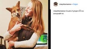 Die 19-jährige Gemma Holdway mit ihrer kleinen Füchsin Vixey