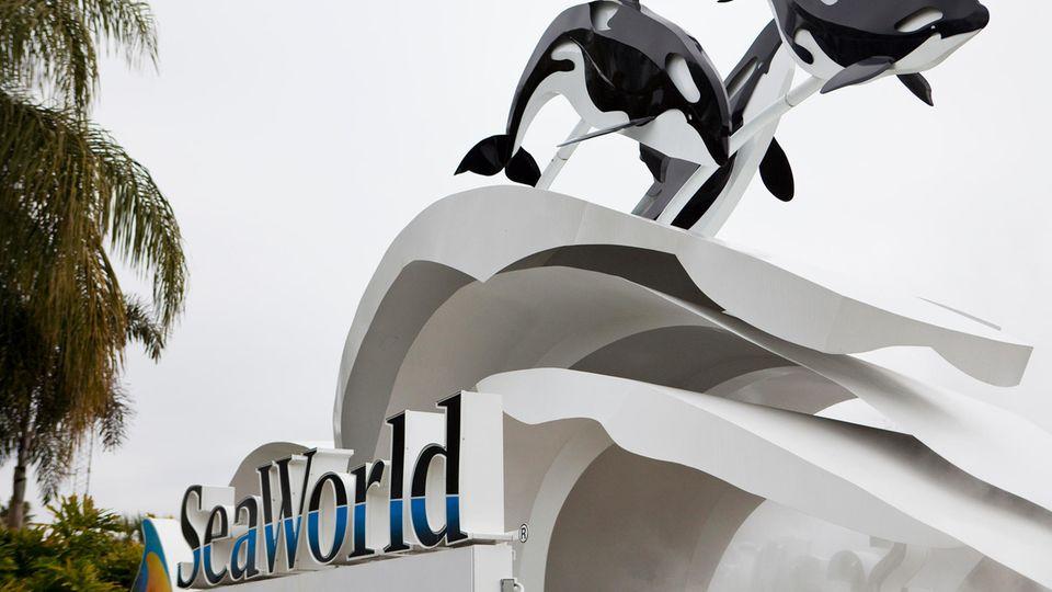 Seaworld: Schwertwal Kayla stirbt im Alter von 30 Jahren