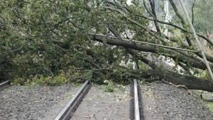Ein umgestürzter Baum blockiert die Bahngleise