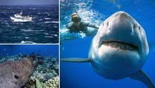 Das Meer und seine Bewohner könnenaufgrund der ungewissen Gefahren Ängste auslösen.