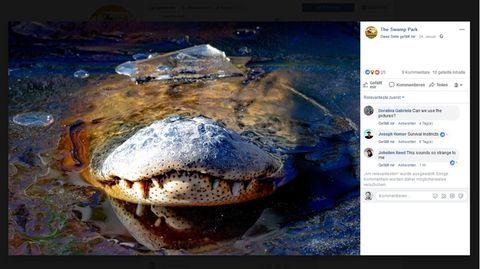 Polar Vortex: In North Carolina frieren nun sogar die Alligatoren ein – mit erstaunlichen Folgen
