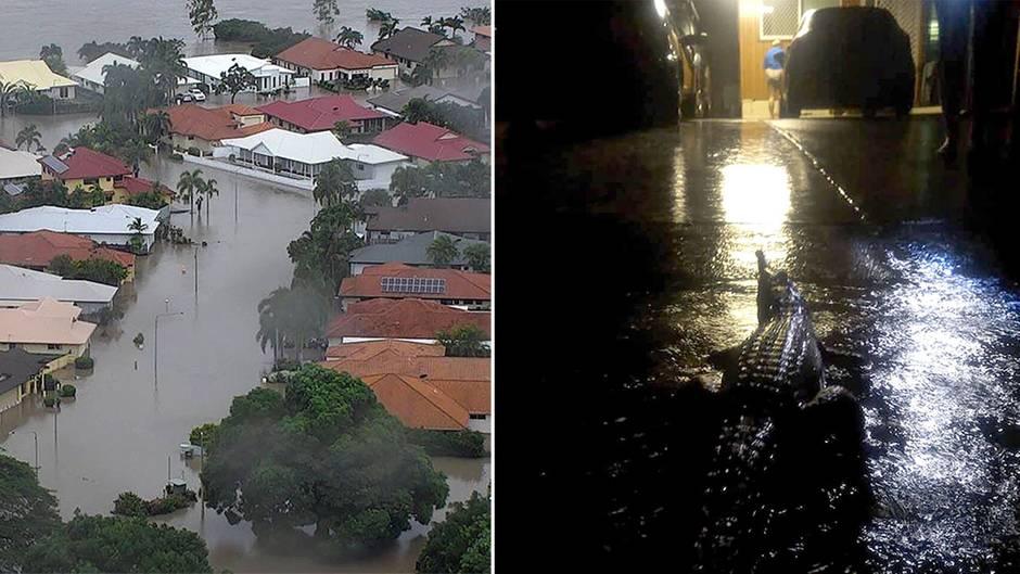 Bundesstaat Queensland: Fluten treiben gefährliche Krokodile in die Städte