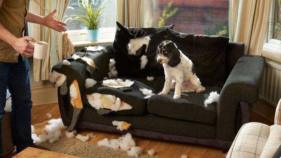 Tipps von Martin Rütter: Was tun gegen Zerstörungswut beim Hund?