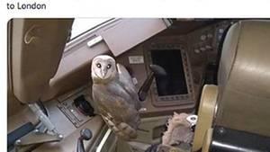 Eule im Cockpit eine Boeing 777 vonJet Airways