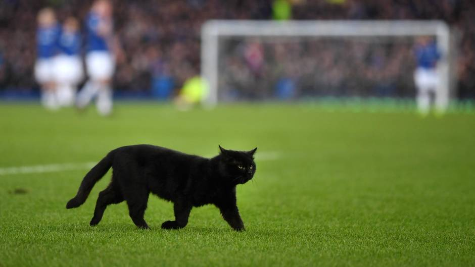 """""""Flitzer"""" in der Premier League: Sieben Minuten Nachspielzeit - und diese Katze ist schuld"""