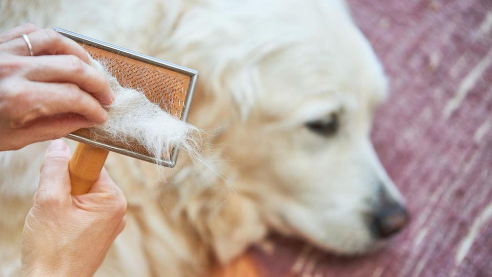 Wissenswertes rund um den Fellwechsel bei Hunden