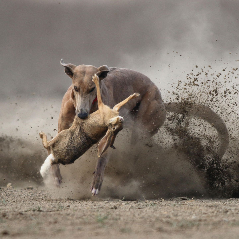 Jagdtrieb Abgewohnen Warum Jagen Hunde Stern De