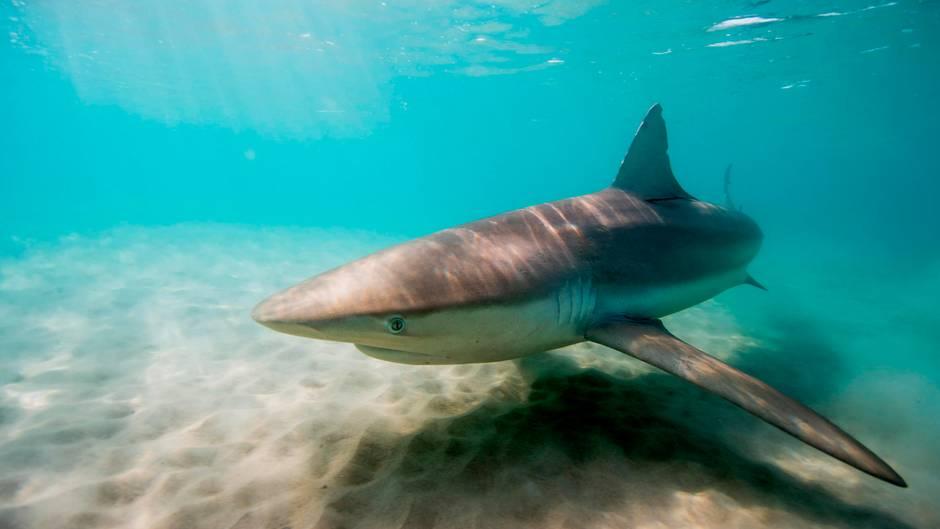 Israel: Haie gesichtet