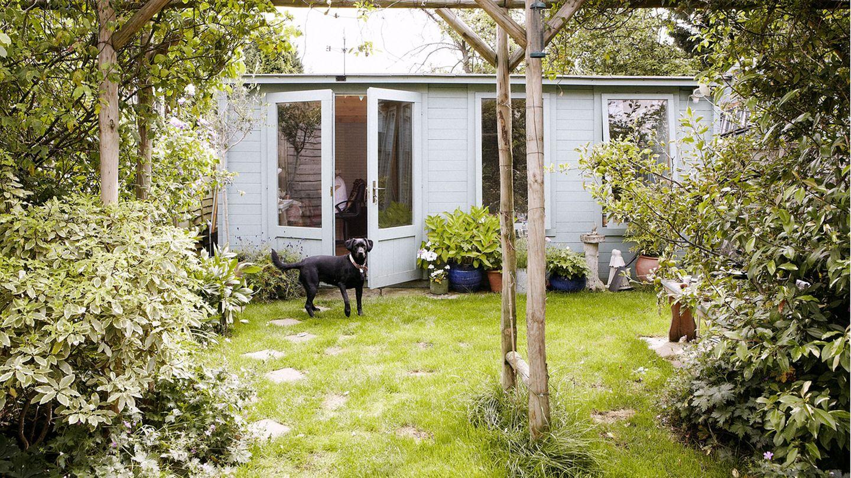 Gefährlich für den Hund: Gift im Garten