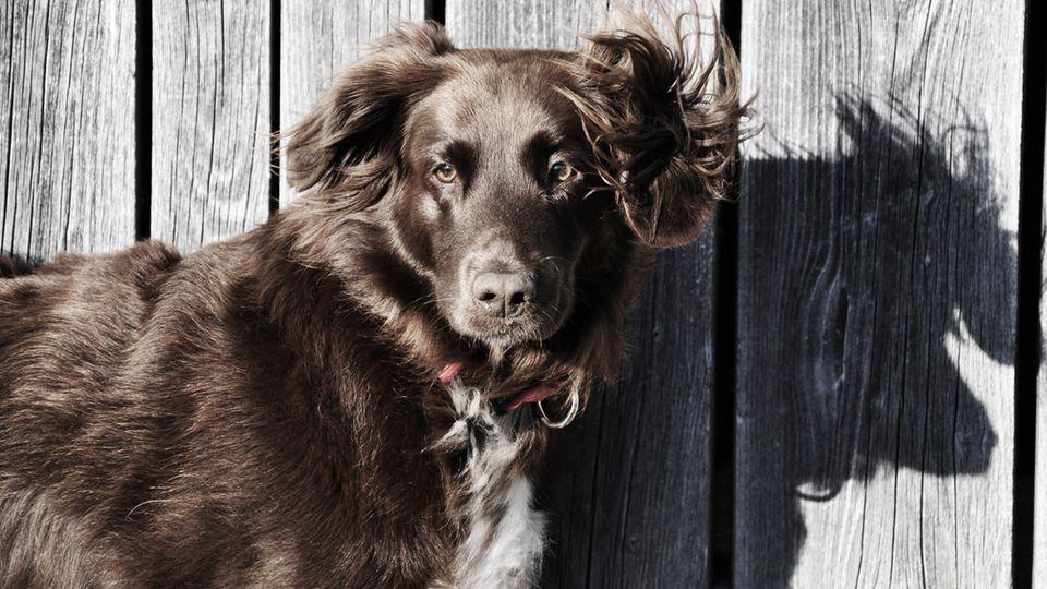 Was das Aussehen über einen Mischlingshund verrät