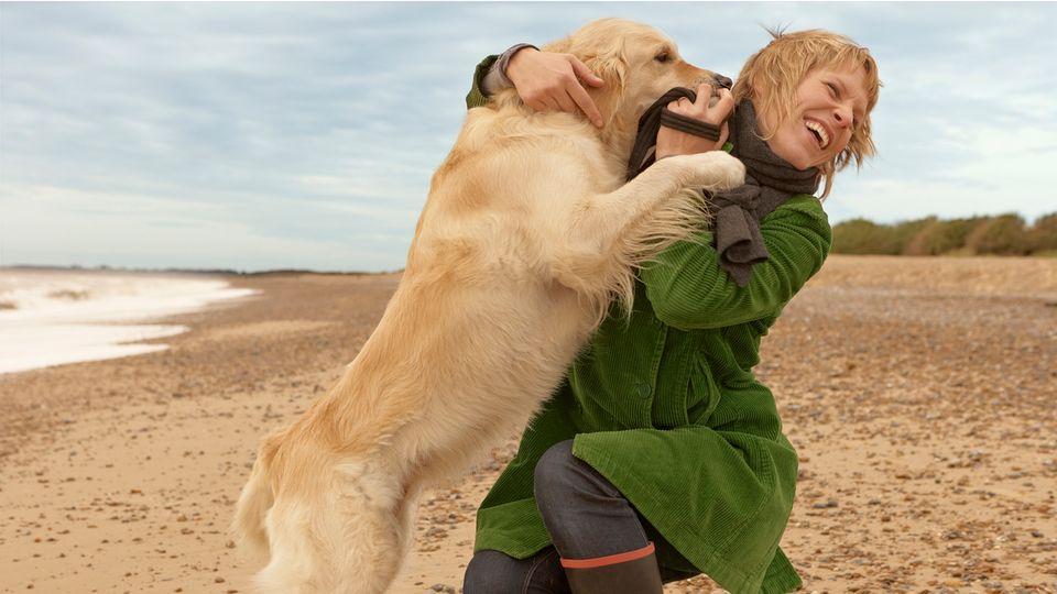 Wie man Hunden das Anspringen abgewöhnt