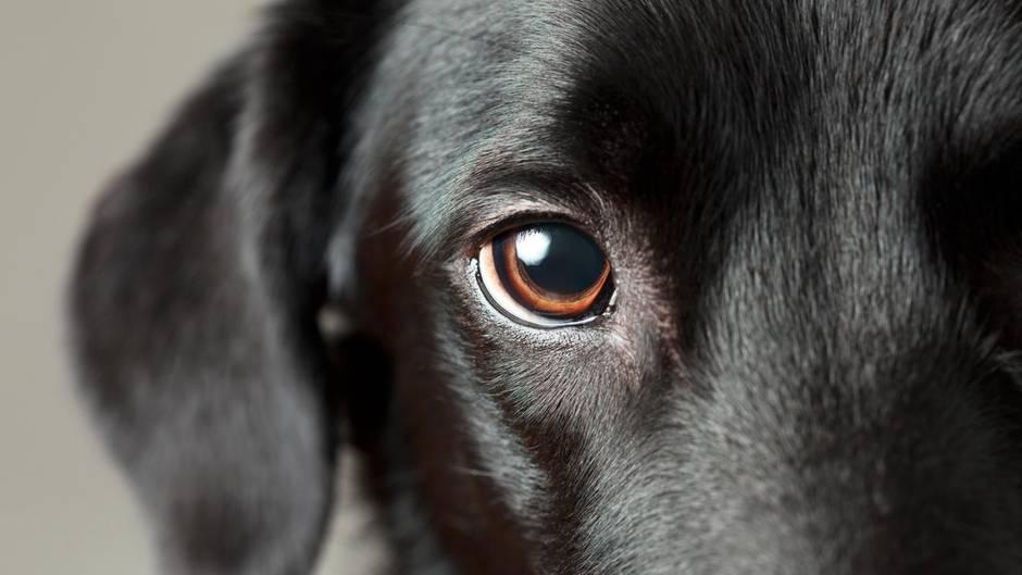 Das Auge des Hundes: Was können sie sehen?