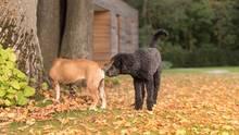 Das Sexualverhalten von Hunden: Leiden sie darunter, sich nicht fortpflanzen zu dürfen?