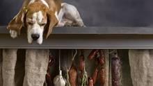 Ist Knoblauch für Hunde giftig?