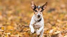 Hundetraining mit der Schleppleine
