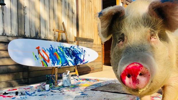 Mit rotem Rüssel steht Hausschwein Pigcasso neben einem frisch erstellten Gemälde