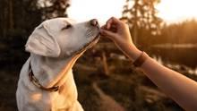 Welche Lebensmittel für Hunde giftig sind