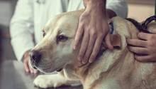 Was ist die richtige Ernährung für alte Hunde?