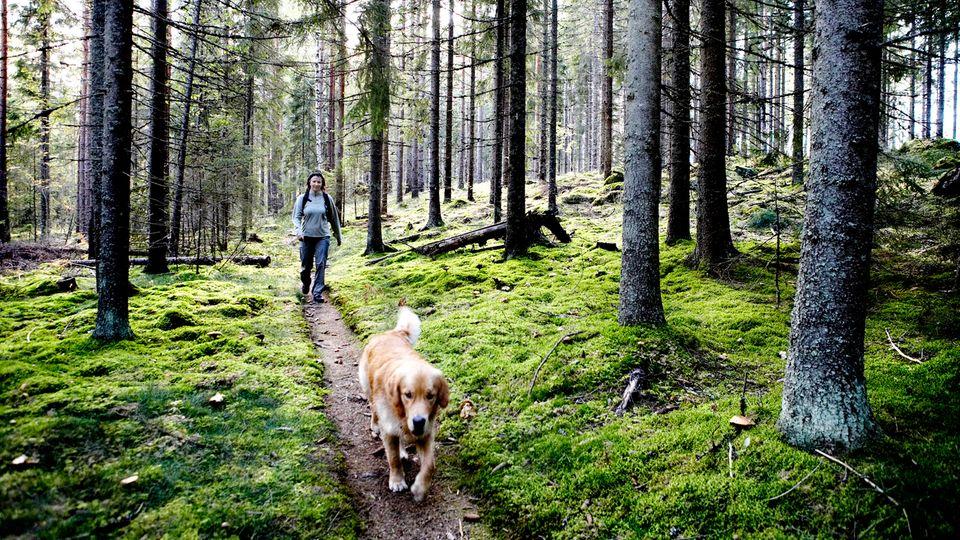 Diese zwölf Regeln von Hunde-Profi Martin Rütter sollten Sie beachten, wenn Sie ihren Hund ohne Leine laufen lassen
