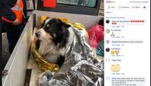 Geschwächter Hund in Wärmedecke eingewickelt
