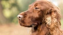 Krankheit oder Erbe - warum sabbern Hunde?