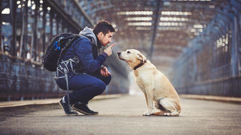 Macht und Ohnmacht in der Hundeerziehung - wie konsequent müssen wir sein?