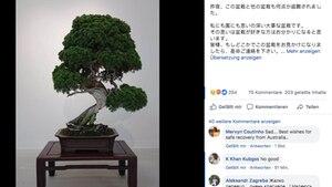 Abbildung eines Bonsai-Baums in einem Facebook-Posting