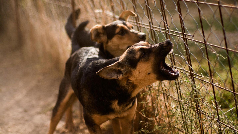 Hilfe für aggressive Hunde