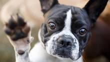 Nervöse Vierbeiner: Wie bekomme ich meinen Hund zur Ruhe?