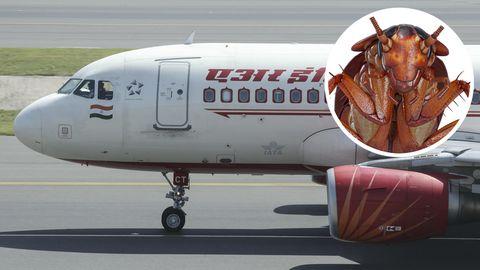 Ein Airbus A319 von Air India: In einem Flugzeug dieser Art ereignete sich der Zwischenfall mit der Kakerlake im Essen.