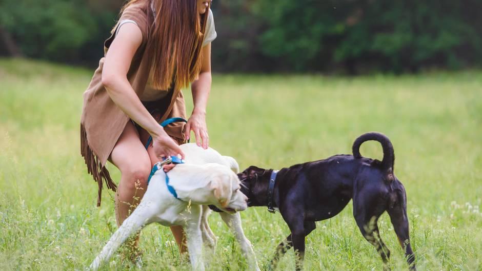 Wenn Hunde sich streiten - wie verhalte ich mich richtig?