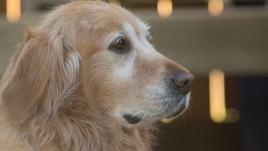 Demenz Arthrose Co Woran Leiden Hunde Im Alter Sternde