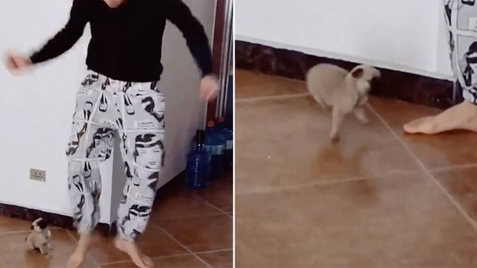 Süße Szene: Mini-Hundewelpe tanzt seinem Herrchen alles nach