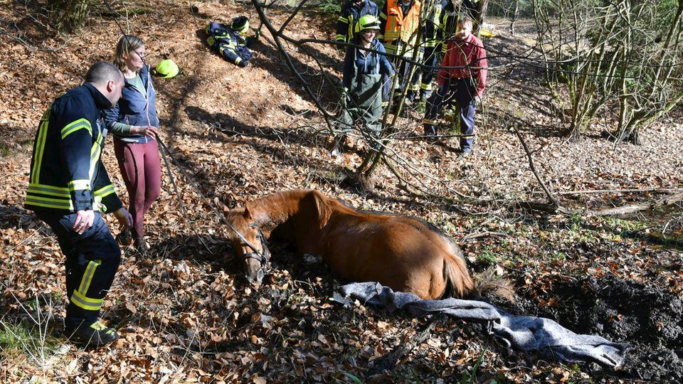 Hessen, Eppertshausen: In Südhessen ist ein Pferd in einem Tümpel versunken