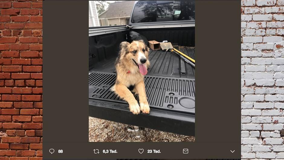Hund Lola lief Brooks eines Nachmittags einfach zu