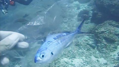 Thailand: Taucher retten hilflosen Fisch aus Plastiktüte