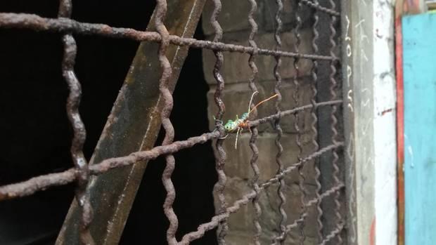 Eine bunte Ameise an einem Gitter