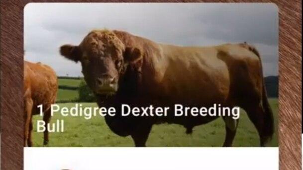 Tudder: Tinder für Rinder