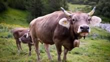 Tinder: Tudder für Rinder