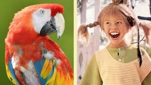 Pippi Langstrumpf: Papagei Rosalinda ist gestorben