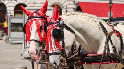 Pferde stehen auf einem Platz